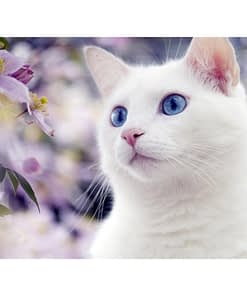 5D DIY White Cat Diamond Painting