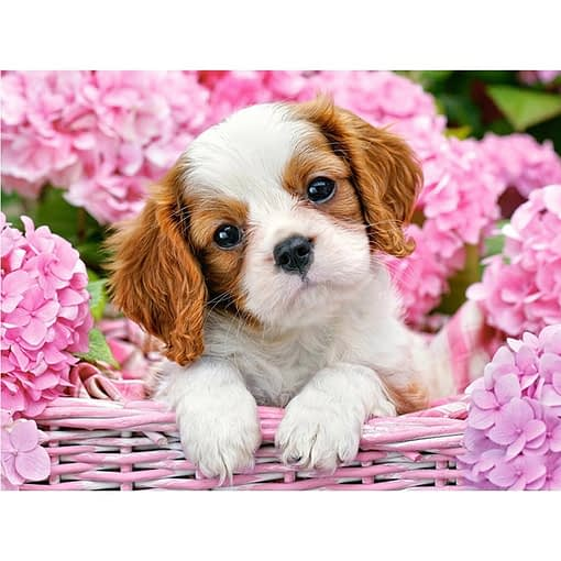 5D Diamond Painting Cavalier King Charles Spaniel